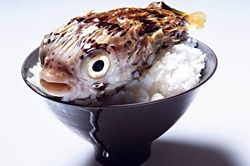 Eat with caution! One bite of Fugu might be your last.